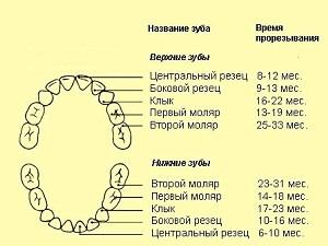 Зубы у детей порядок прорезывания молочных зубов сроки.