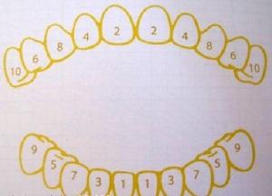 в каком порядке прорезаются молочные зубы у детей