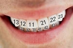 нумерация зубов человека